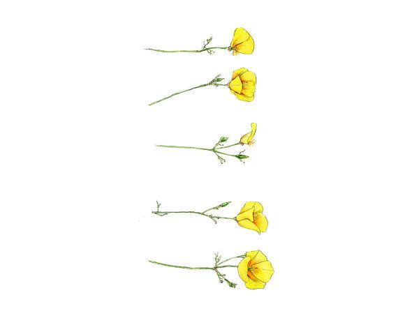 California poppies. I like this Etsy Store for kitchen art! Yellow California Poppies Watercolor Botanical by bramblepie, $34.00