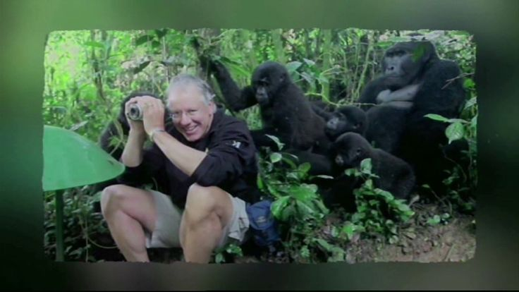 Touched by a Gorilla | #CaughtintheAct  Tourist John King is surrounded by a group of wild mountain gorillas who begin stroking and sniffing him on a trail near Bwindi National Park in Uganda and its all caught on camera.