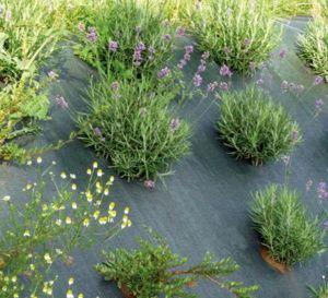 Le printemps est là : prenez soin de votre jardin !