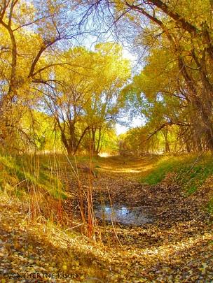 Autumn in the Woods   2012-2013 Arizona Highways Online Photography Contest  Submitted by: Catherine McCracken Koon  Watson Woods- Prescott, Az