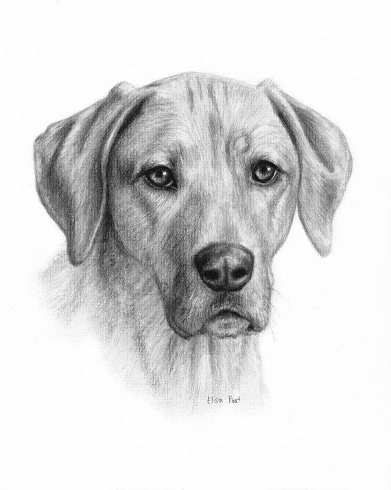 Dog Portrait Drawing Dog Drawing Custom Custom Pet Drawing