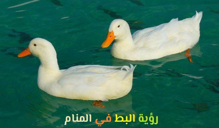 تفسير رؤية البط في المنام لابن سيرين Spirit Animal Paradox Beautiful Birds