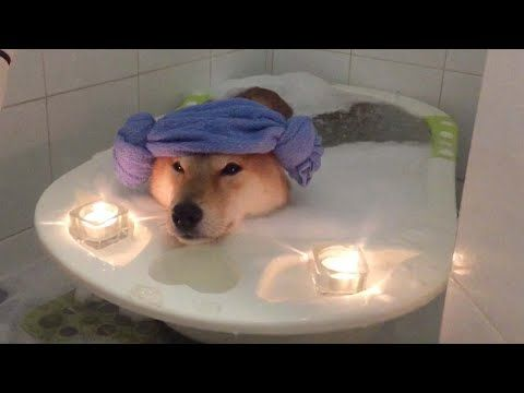 Dog Relaxing In Bubble Bath Youtube Relaxed Dog Cozy Dog Pooch