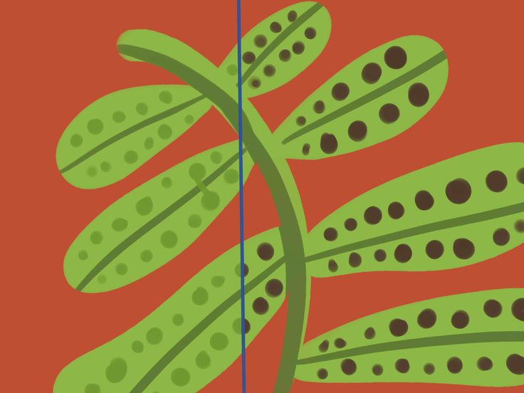 Part of what will make the process of growing a fern indoors easier is understanding what the plant needs. Ferns are common to tropical climates. They thrive in the filtered light, temperate climate and high humidity of forests. The good...
