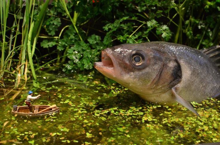 Honestly, It Was This Big! small world, fisherman, fishing, fish, pond, pond life, Man vs Nature