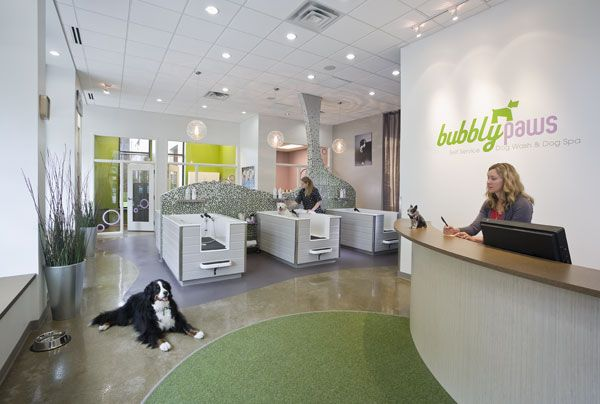 Imagine These: Retail Store Interior Design | Dog Spa | Bubbly Paws | St. Louis Park | Minnesota | U+B