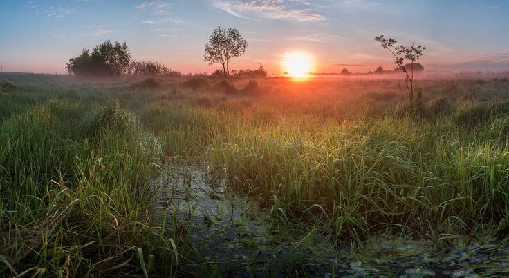 Bokinskie meadow after spring flood in May by Alexandr Bredikhin on 500px