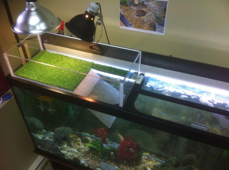 diy turtle dock-didn't work because my turtle ate the artificial grass :(