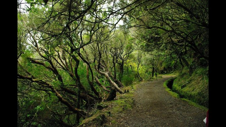 Fotos de: Portugal - Madeira - Rabacal - Levadas - Risco