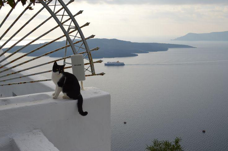 Gato en la cornisa - Hotel Fira Palace - Santorini