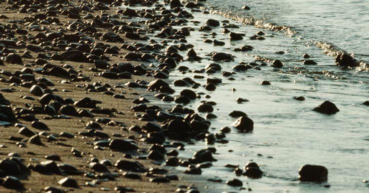 Cómo excavar para encontrar gusanos de mar. Algunos expertos prefieren el cebo natural sobre el artificial ya que los peces miran el movimiento que el alimento natural proporciona, aunque su costo y su corta vida útil sean una desventaja. Los gusanos son una gran fuente de cebo para la pesca natural que se puede encontrar fácilmente en las playas durante la marea baja. Excavar tus propios ...