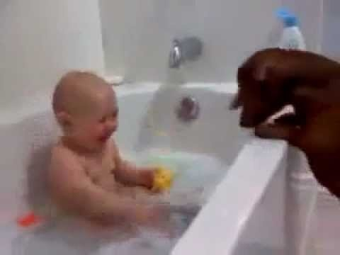 hilarious laughing baby in tub teasing dachaund with toys. Definitely laughed out loud at this haha