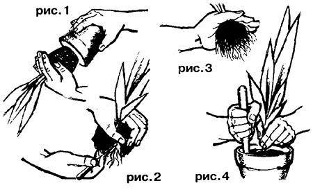 СОВЕТЫ ПО ПРАВИЛЬНОЙ ПЕРЕСАДКЕ КОМНАТНЫХ РАСТЕНИЙ Сохраните, чтобы не потерть!  Когда необходима пересадка комнатных растений и цветов  Сначала давайте уточним, в каких случаях комнатным растениям обязательно нужна пересадка. Признаки неоходимости пересадки растений  - Если невооруженным глазом видно, что горшок тесен.  - Если почва очень быстро пересыхает и ее приходится часто поливать.  - Если, наоборот, почва закисла, на ее поверхности появился моховый налет и стебли стали подгнивать…