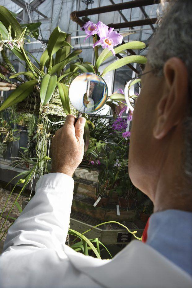 Experimento sobre lentes convergentes