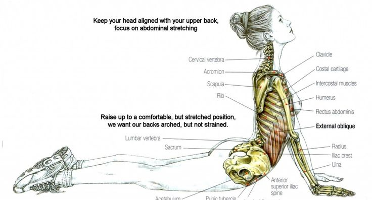 Stretching: Stretching the Abdominals #fitness #exercise
