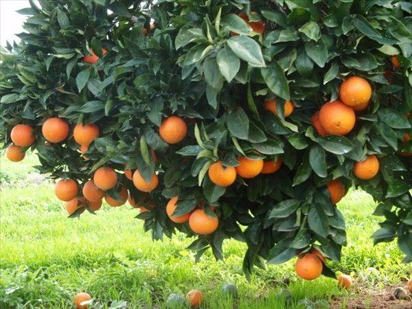 Low-hanging fruit...