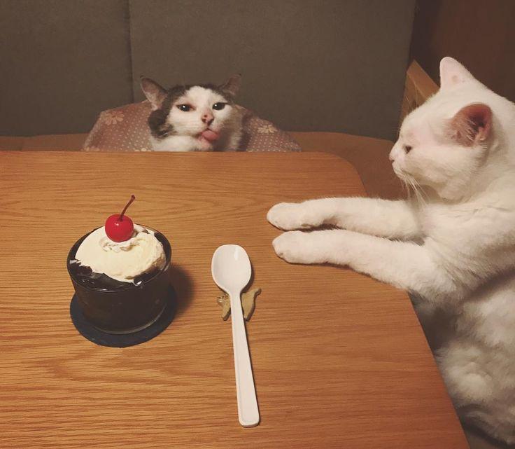 お風呂上がりに〜♨︎ おこ『さ〜いただこうか♪』 八『んべっ♪』 珈琲ゼリーバニラアイスのっけ♩ お父はん、まだかなぁ〜。 #珈琲ゼリー #バニラアイス  #八おこめ #ねこ部 #cat #ねこ #八おこめ食べ物