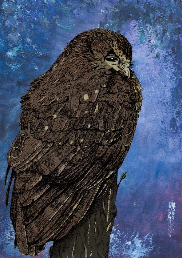 Mixed media illustration of a Morepork (New Zealand owl)