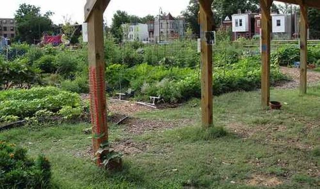 Common Good City Farm is one of many urban farms in Washington, D.C.