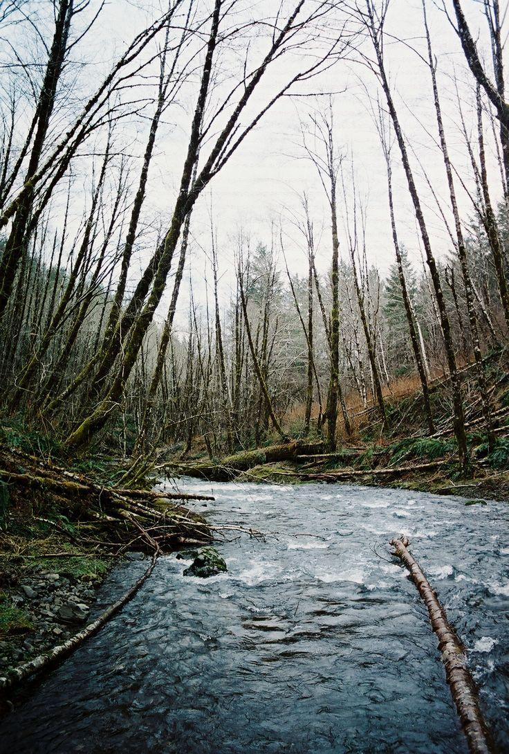 Tim Roth: Stream, Backyard, Photography