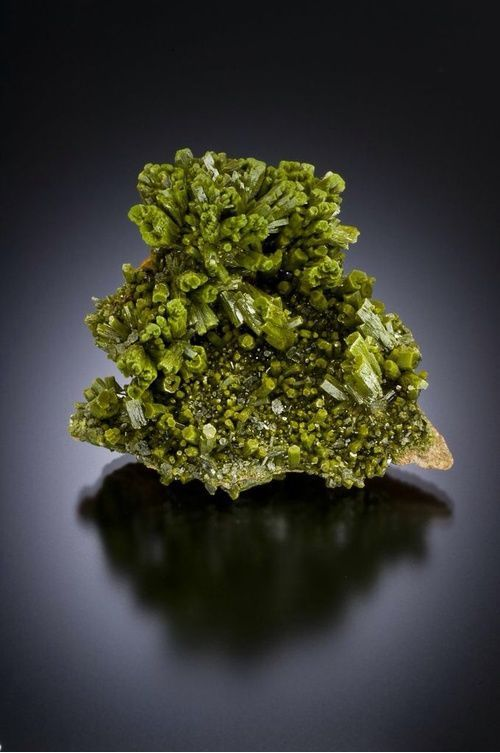 Pyromorphite - Wheatley Mines, Phoenixville Mining District, Schuylkill Township, Chester Co., Pennsylvania, USA Size: 55 mm
