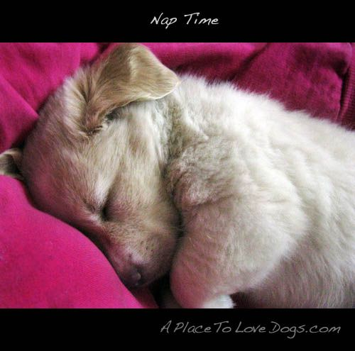 i'll just catch up on a bit of sleep: Bit, Dogs, Catch, Puppys, Cute Photos, Day, Amazing Photos