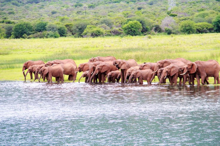 Elephant on the shores of Lake Jozini.  Taken from Ghost Mountain Safaris boat cruise.