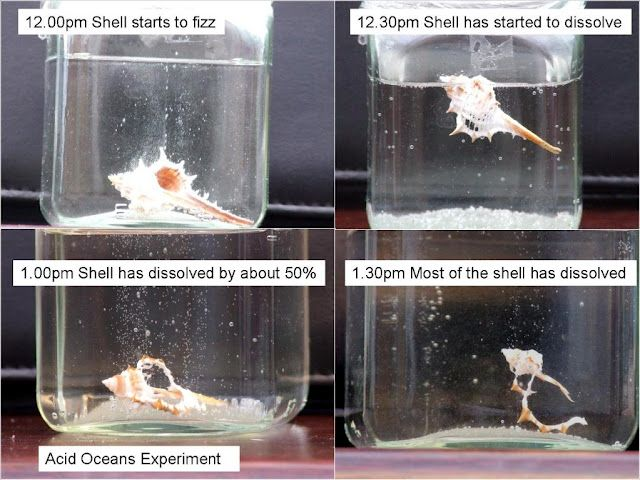 Acidic ocean experiment- good for Earth Day