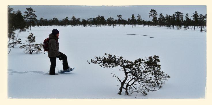 Lumikenkäilemässä
