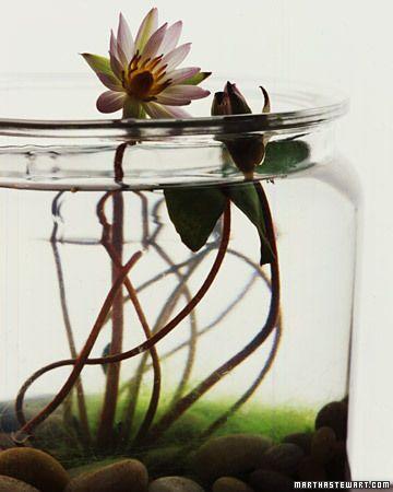 Indoor water garden how-to by Martha Stewart