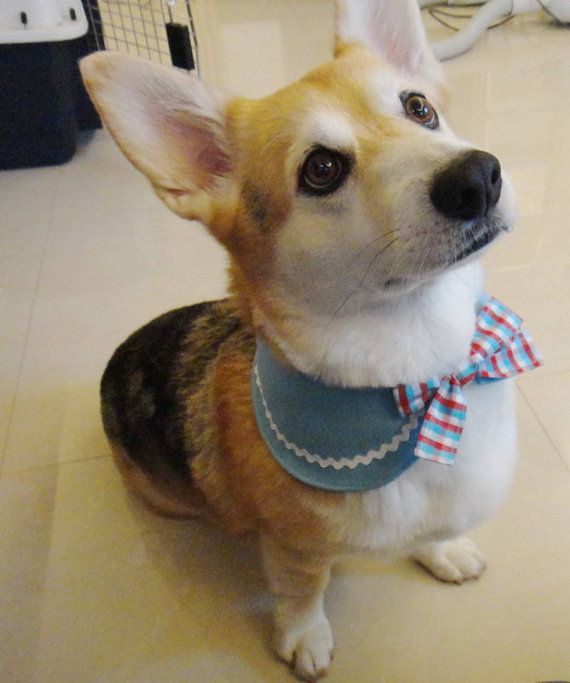 Dog bandana Peter Pan collar bandana with ric rac trim Reversible Corgi bandana Medium breed dog accessory blue red white gingham ( MS- MM)