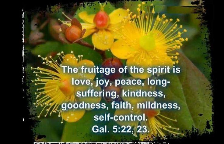Fruita ge of the spirit