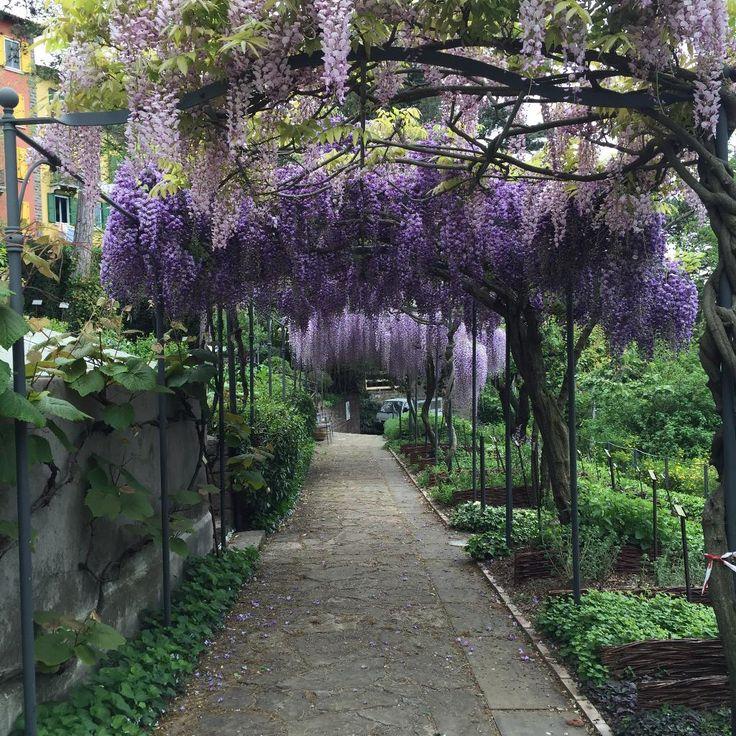 Garden La Piazza: Best 25+ Trieste Ideas On Pinterest