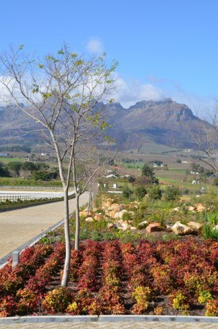 Cavalli Stud Farm and wine estate , Stellenbosch