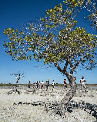 The Lurujarri Heritage Trail is an 84km coastal walk starting in Broome. It follows an ancient indigenous songline. The Goolarabooloo people walk the trail annually, connecting with significant sites to keep it and themselves alive. Anyone can join them.