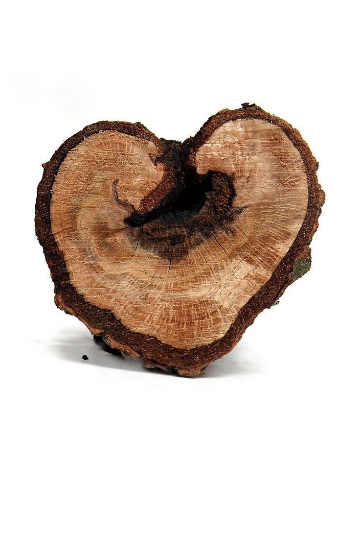 heartwood (mary jo hoffman)