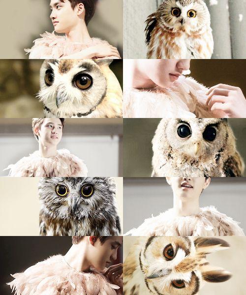 Animal edit - Owl - EXO/D.O