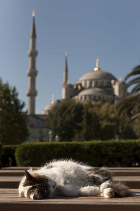 Istanbul & it's cats