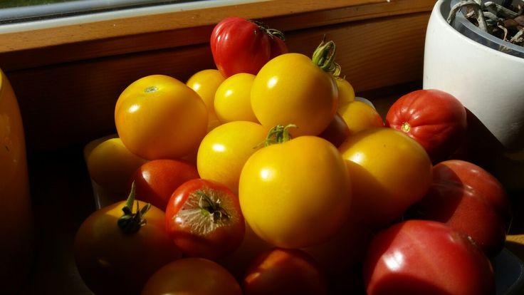 Wir sind stolz auf unsere hauseigenen Tomaten - 100% BIO www.almrausch.co.at