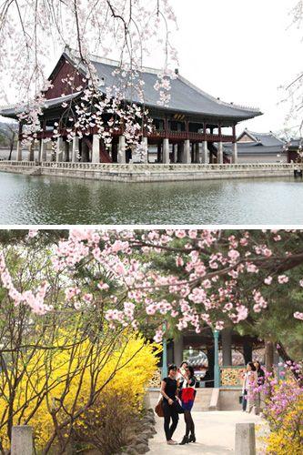 続々開花!韓国で楽しむ春の花祭り | NOW!ソウル|韓国旅行「コネスト」