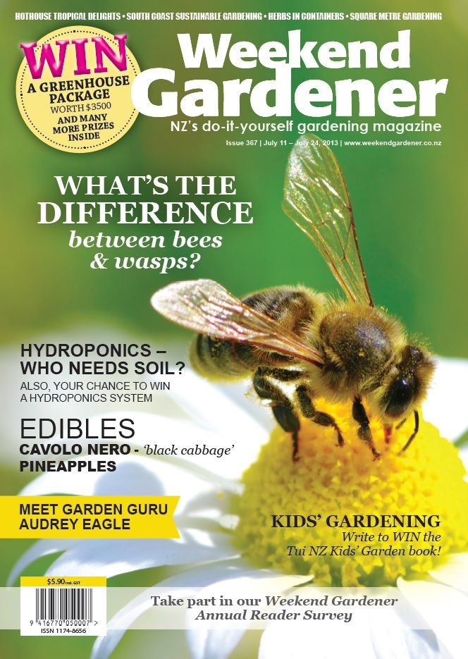 In 367 we ask ourselves what the difference is between bees and wasps, we check out hydroponics – who needs soil? And our edibles are black cabbage and pineapples.