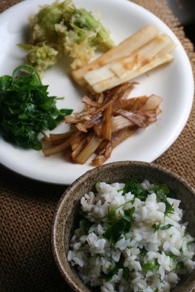 2013.04.29 「うどの皮のきんぴら」 「うどの酢味噌和え」 「ふきのとうの天ぷら」 「うこぎのお浸し」 「うこぎごはん」