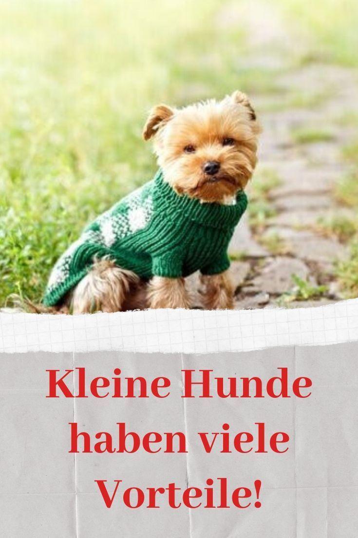 Kleine Hunde Haben Viele Vorteile Deine Tiere Adoption Kleine Hunde Hunde Hund Adoptieren
