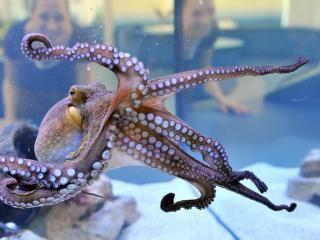 Octopus kan zien met huid nu.nl (Ilse)