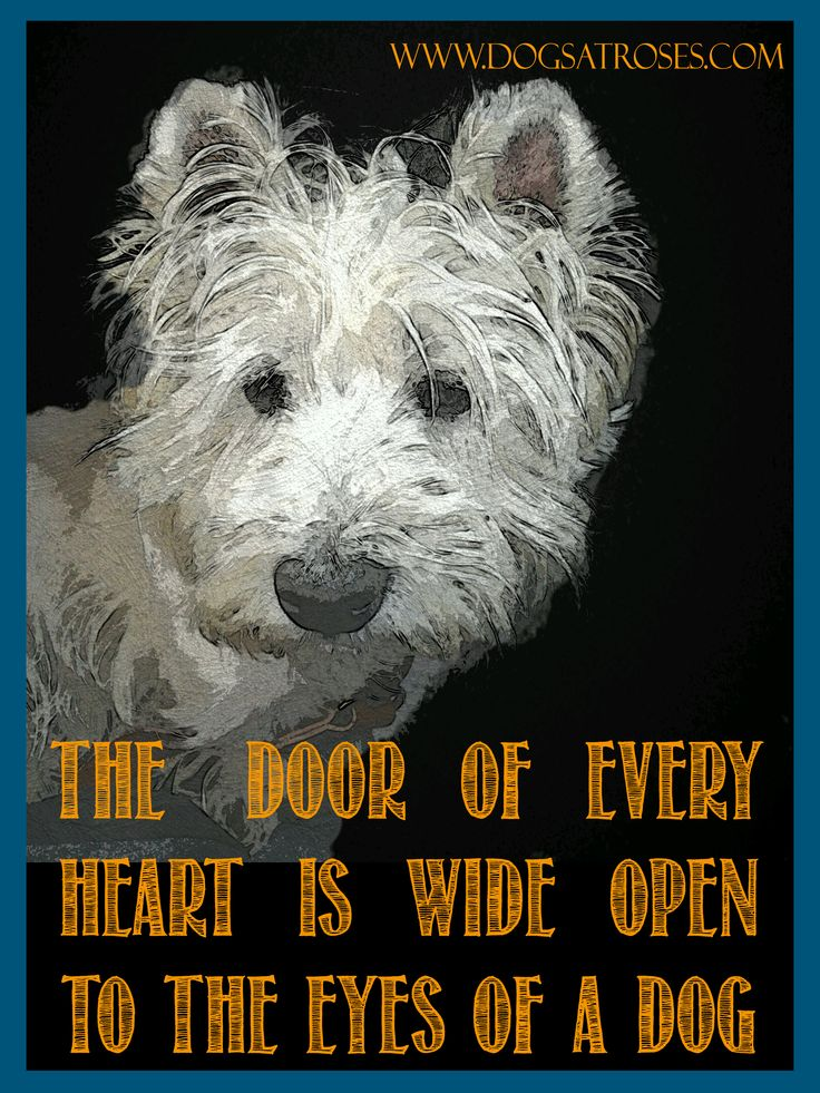 Dog is the being who understands us more than anyone.