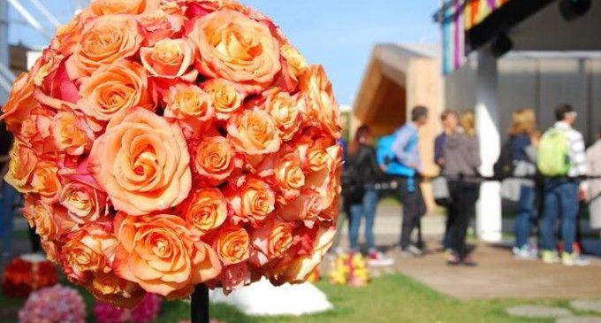 Belleza de las rosas ecuatorianas cautivan al mundo (VIDEO)