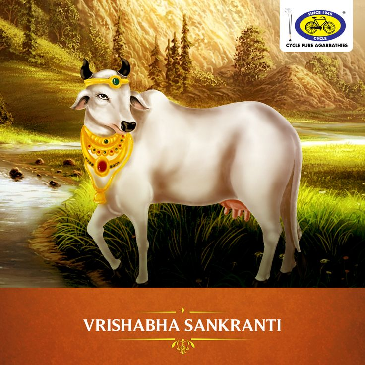 Vrishabha Sankranti marks the beginning of the second month of the Hindu calendar. Lord Vishu is worshipped with much devotion on this day. It is also deemed auspicious to perform the Pitra Tarpan and to donate cows during this divine festival. #PureDevotion
