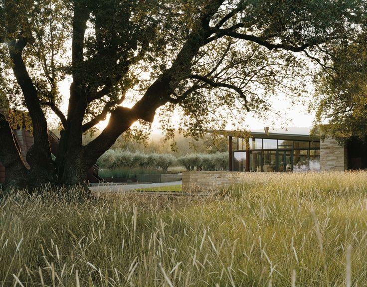 Mediterranean feel at Stone Edge farm in Sonoma, California landscaped by Andrea…