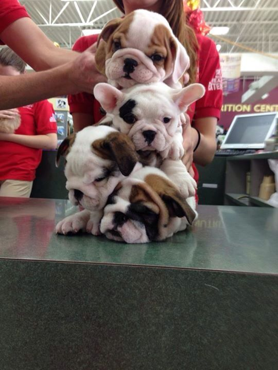 OH GOD, NOW THERE IS A PILE OF WRINKLES.