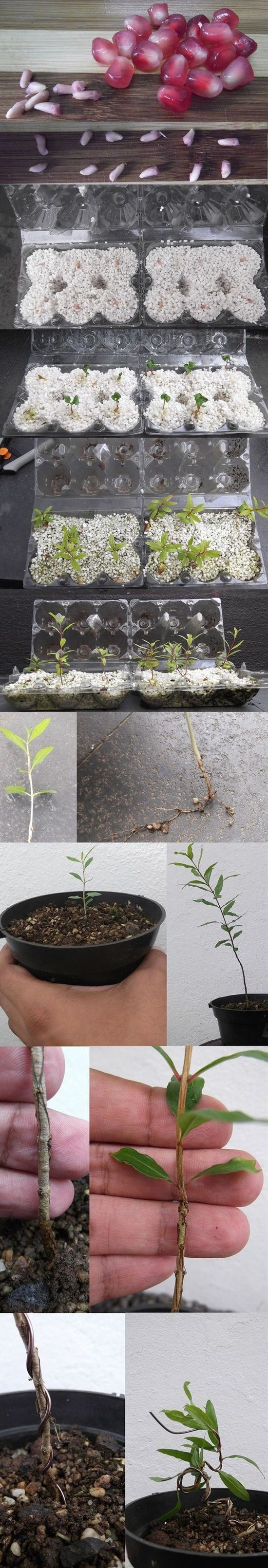 10 Brilliant Ideas To Root and Propagate Plants | Postris